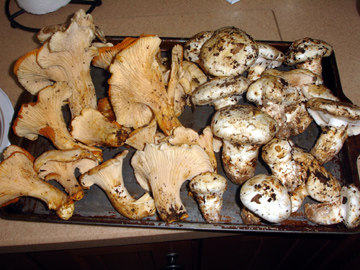 mushrooms3.jpg