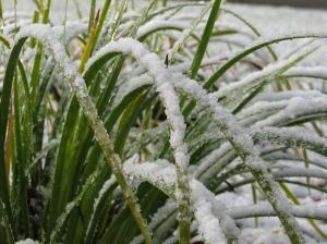 snow-002